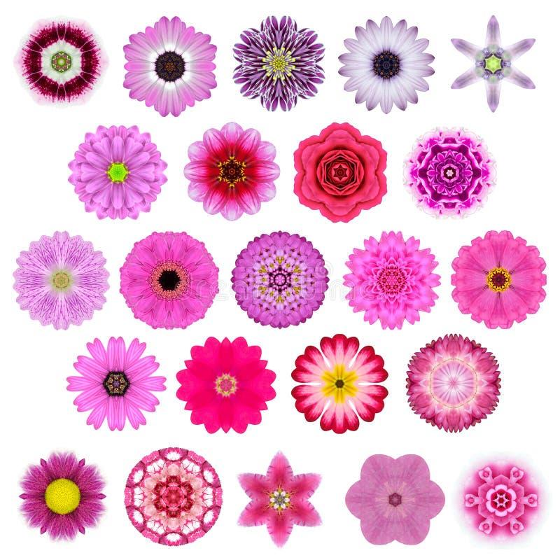 Selección grande de diversa Mandala Flowers Isolated concéntrica en blanco fotografía de archivo