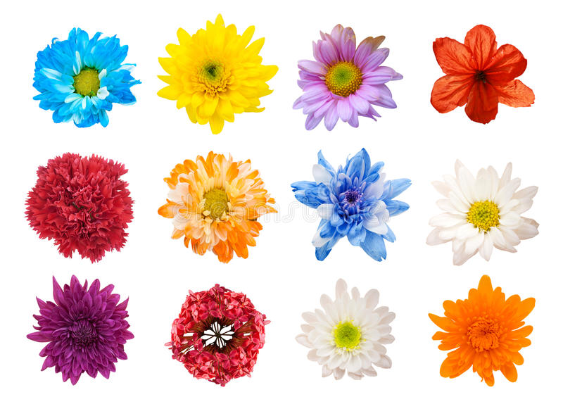 Selección grande de diversas flores aisladas en el fondo blanco foto de archivo libre de regalías