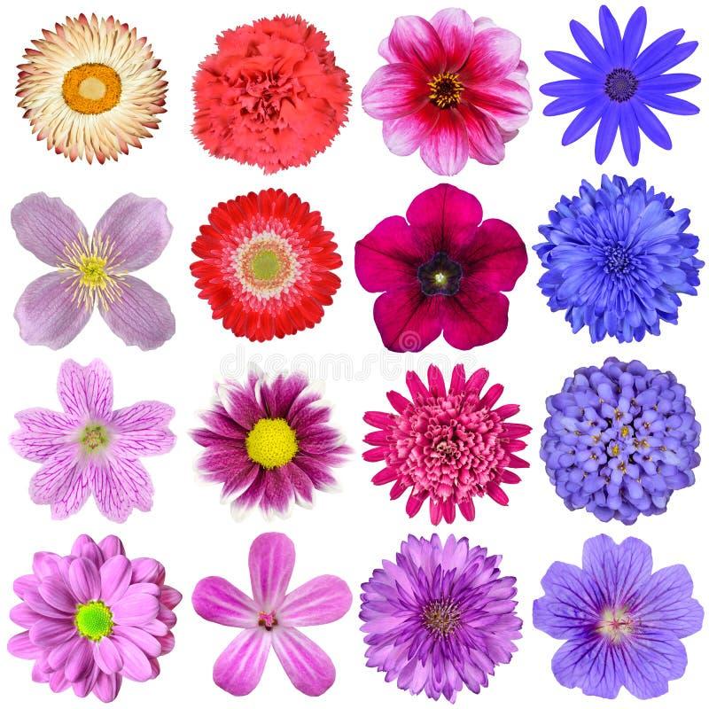 Selección grande de flores coloridas aisladas fotos de archivo