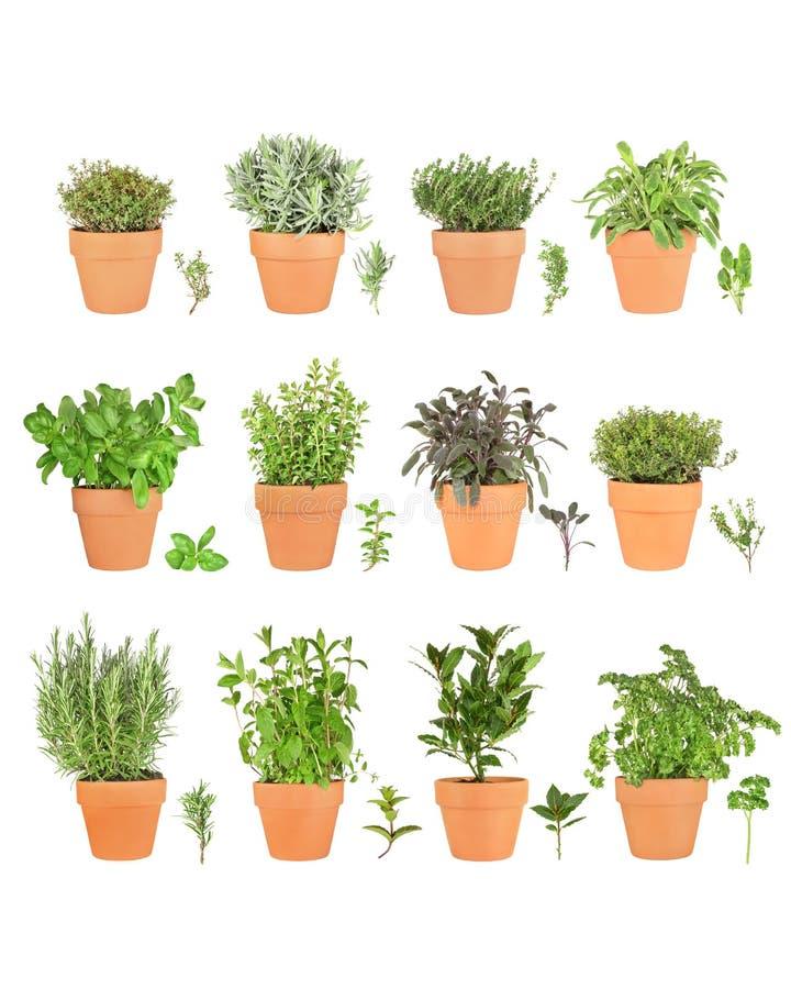 Selección grande de la hierba en crisoles foto de archivo