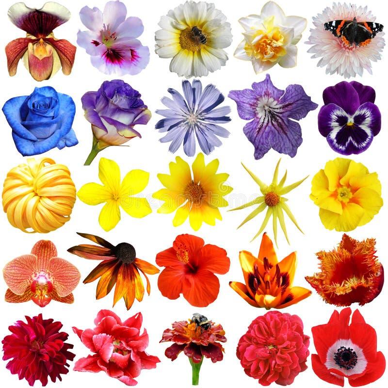 Selecci?n grande de varias flores aisladas fotografía de archivo libre de regalías