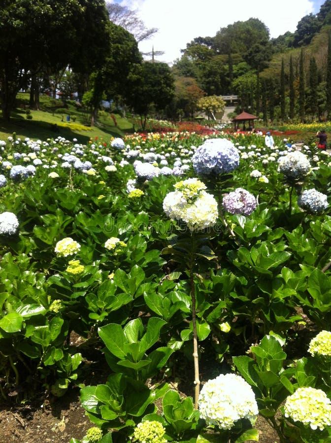 Selecta-Garten Malang Indonesien lizenzfreie stockfotos