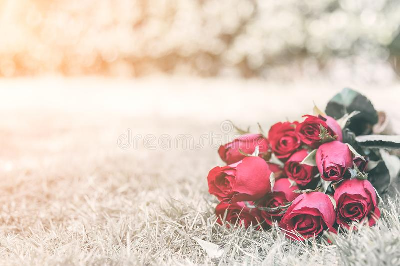 Selected focus on red roses on fresh green grass, small bear doll as a blurred background. Valentines concept royalty free stock photo