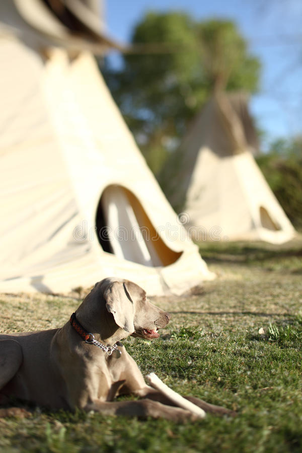 Selected focus on a teepee and dog. A teepee and dog. Travel stock image