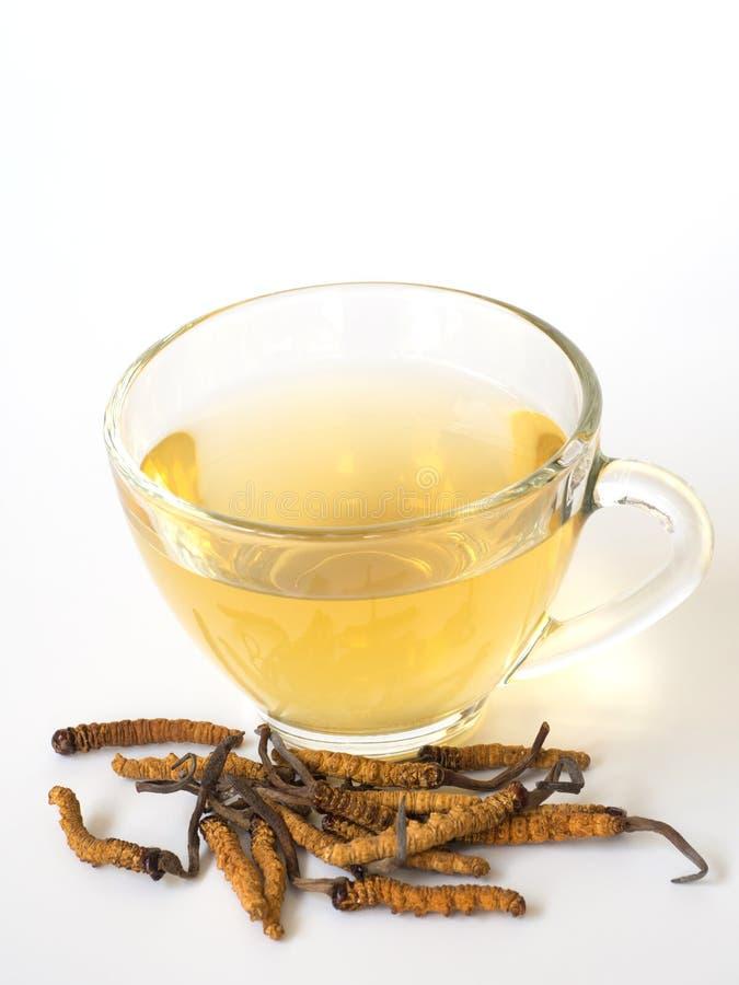 Selecteer nadruk van paddestoel cordyceps CHONG CAO dit kruiden Met een glas water, voeg water van Ophiocordyceps-sinensis Ext. t stock afbeeldingen