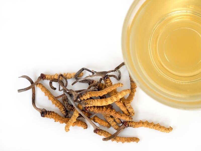 Selecteer nadruk van paddestoel cordyceps CHONG CAO dit kruiden Met een glas water, voeg water van Ophiocordyceps-sinensis Ext. t stock fotografie