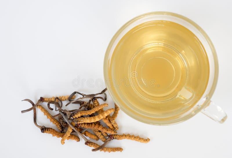 Selecteer nadruk van paddestoel cordyceps CHONG CAO dit kruiden Met een glas water, voeg water van Ophiocordyceps-sinensis Ext. t stock foto