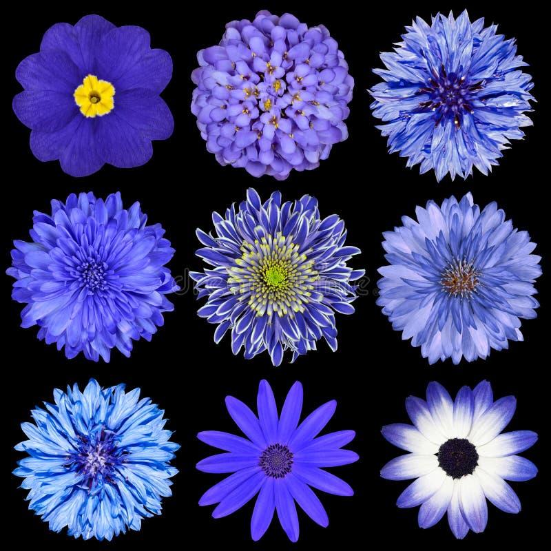 Selectie van de Bloemen van de selectie de Blauwe die op Zwarte wordt geïsoleerd stock foto's