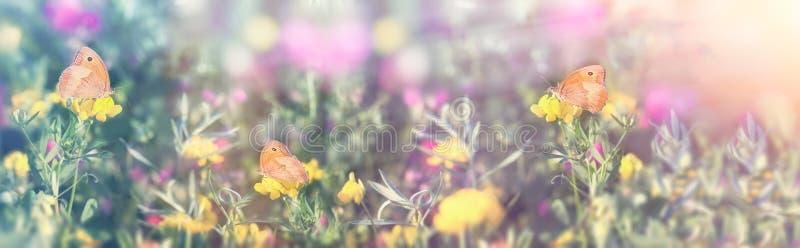 Selectieve nadruk op weinig vlinder - vlinders, mooie weide in de lente royalty-vrije stock fotografie