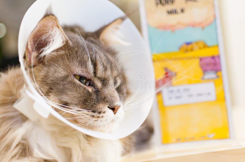 Selectieve nadruk van een zieke kat met veterinaire kegel op zijn hoofd royalty-vrije stock fotografie