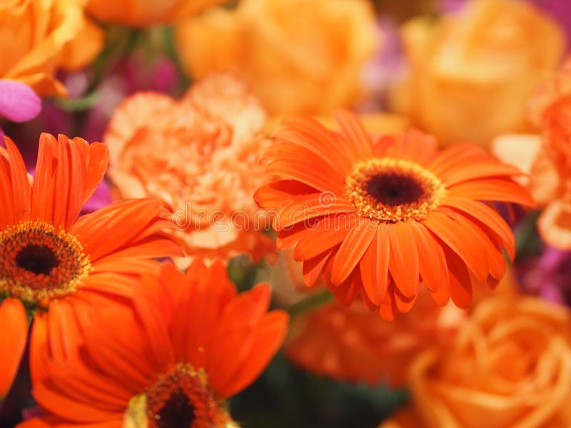 Selection of close up orange Gerbera Flower on blurred of group carnation rose flower background. Environment stock images
