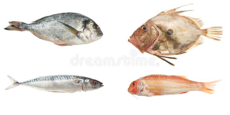 Selection of four fresh fish royalty free stock image