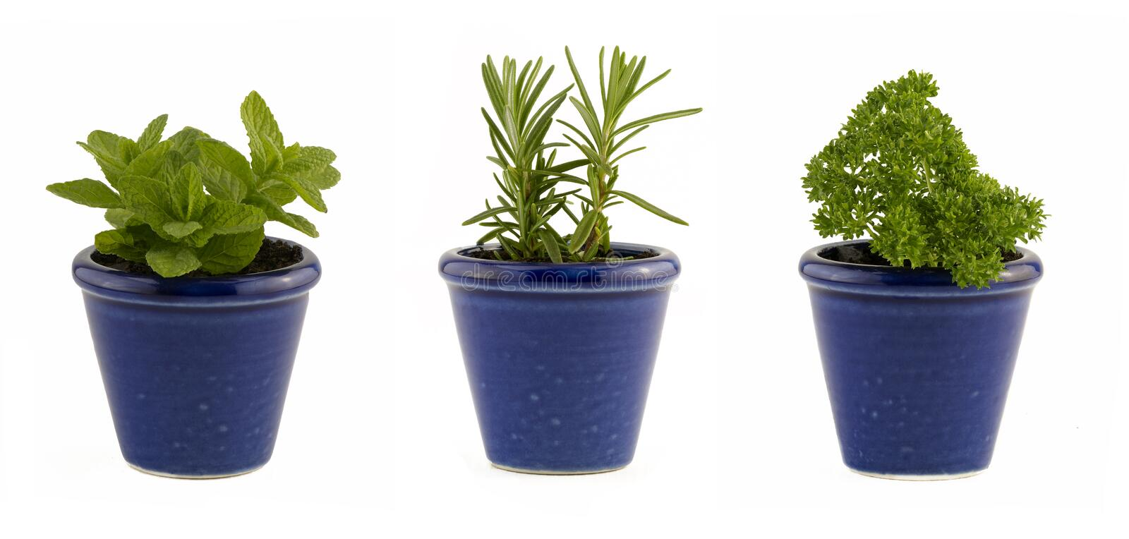 Selection of three herbs mint, rosemary and parsley in small blue pots stock photos
