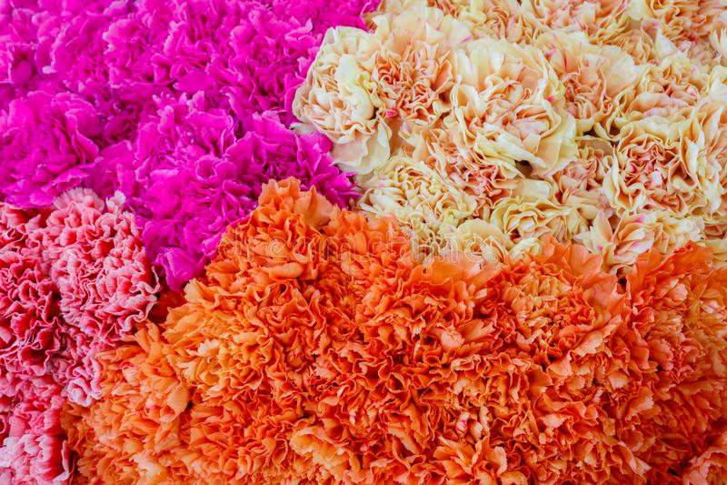 Selection of Various colorful Flowers as a background royalty free stock photography