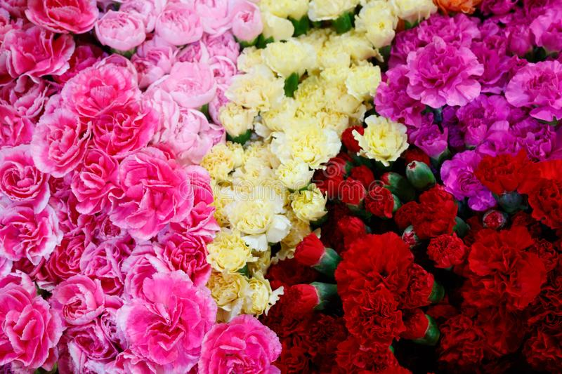 Selection of Various colorful Flowers as a background stock image