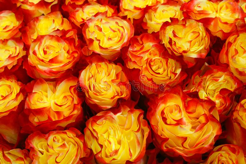Selection of Various colorful Flowers as a background royalty free stock photo