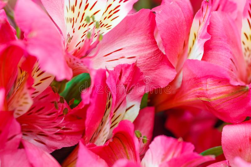Selection of Various colorful Flowers as a background stock photo
