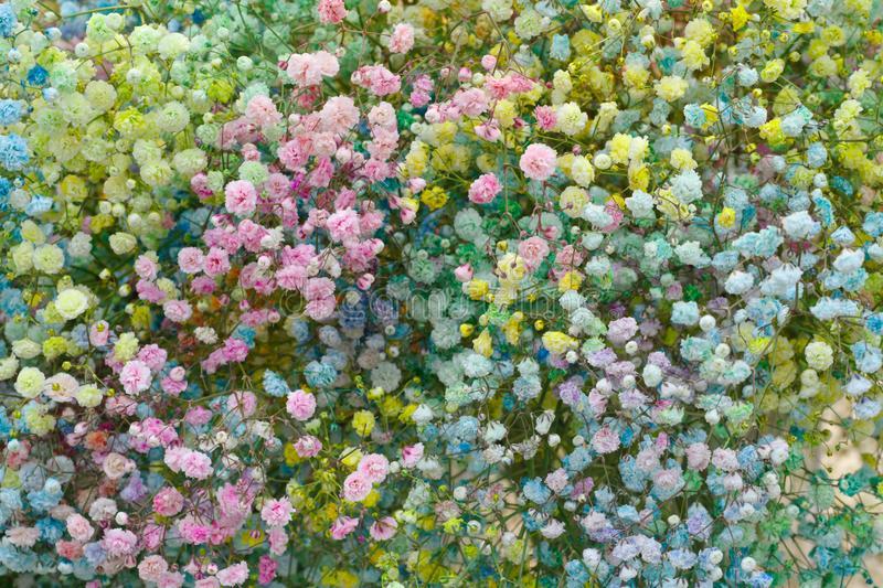 Selection of Various colorful Flowers as a background stock photos