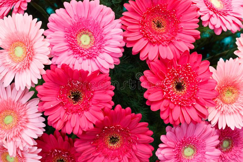Selection of Various red blue colorful Flowers as a background royalty free stock images