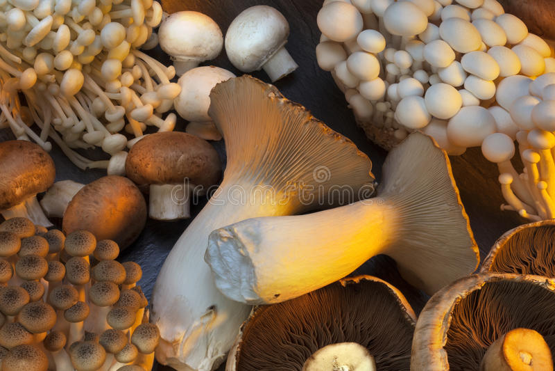 Selection Of Wild Mushrooms Stock Photo