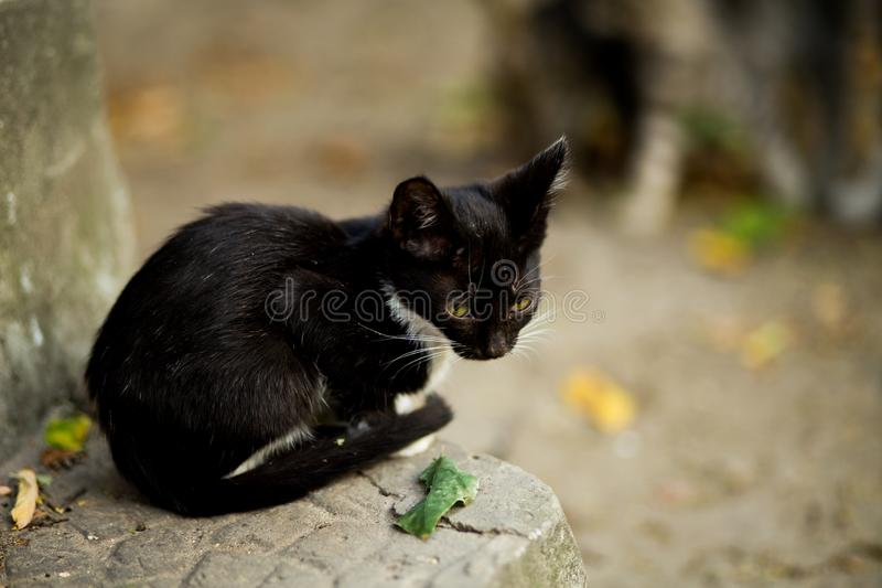 Selective closeup shot of a cute little black cat with yellow eyes on a gray ledge royalty free stock image