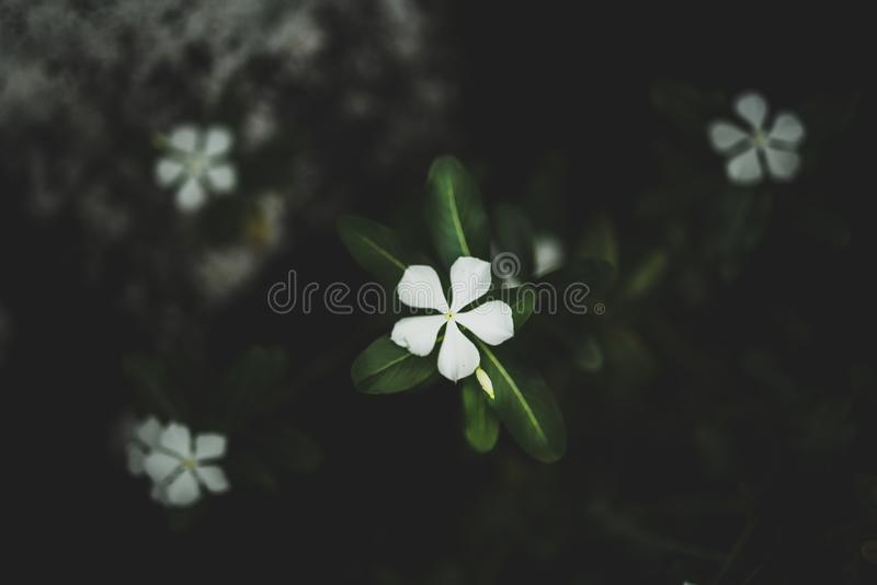 Selective closeup shot of a green leafed white petaled flower. A selective closeup shot of a green leafed white petaled flower stock photos