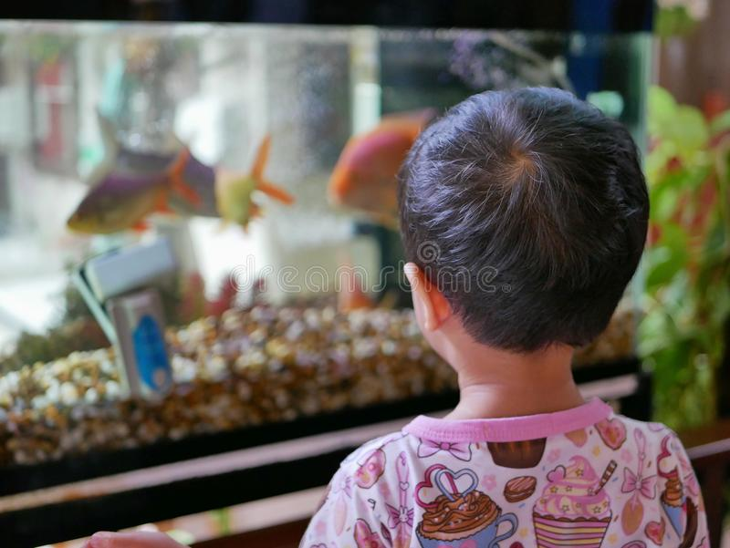 Asian baby looking at fishes in a glass tank with curiosity stock image