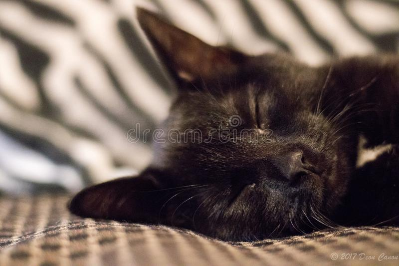 Selective Focus of Black Cat Photo royalty free stock image