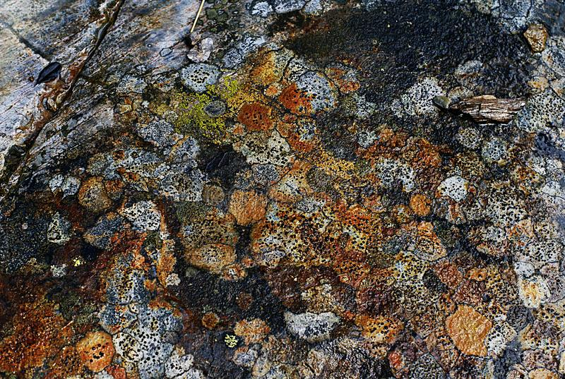 Colorful stones natural background or pattern. royalty free stock images
