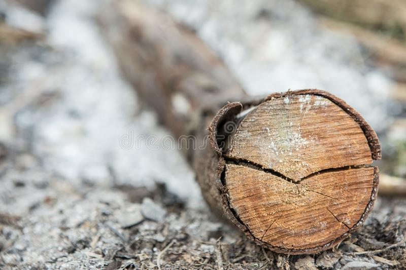 Selective focus of Firewood  in the ashes royalty free stock photography