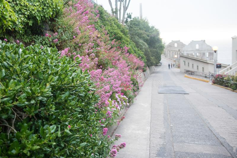 Selective focus on flowers and vegetation in the gardens outside of the Alcatraz Prison in San Francisco California royalty free stock photos