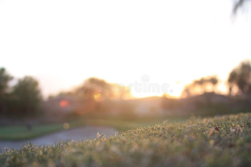 Selective Focus - Golf Course royalty free stock photos