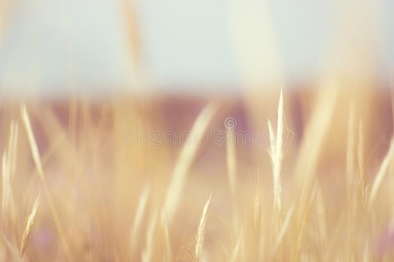 Selective Focus of Green Grass royalty free stock images