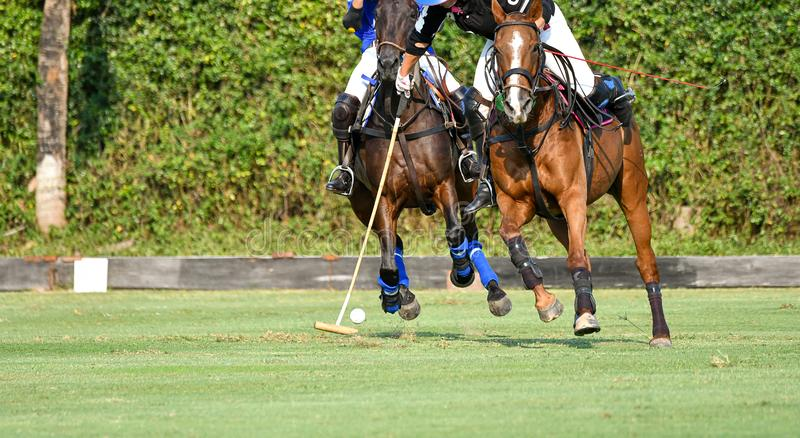 Selective focus the Horse polo. Players are competing in the polo field stock image