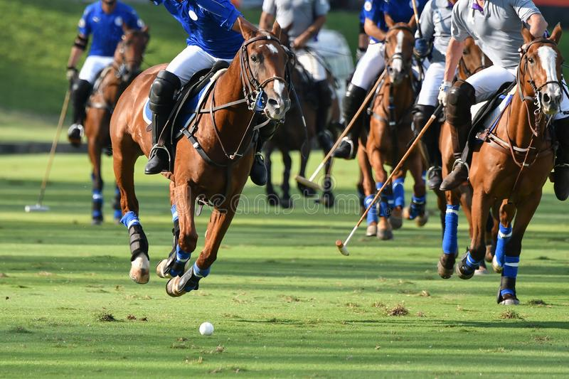Horses Polo Run In The Game. Selective Focus The Horses Polo Run In The Game royalty free stock photos