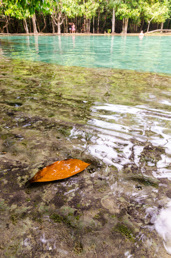 Selective focus on leave submerged in tropical water pond at Emerald Pool, Krabi during bright day. stock photos
