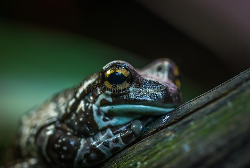 Selective Focus Photo of Brown and Green Frog stock photos