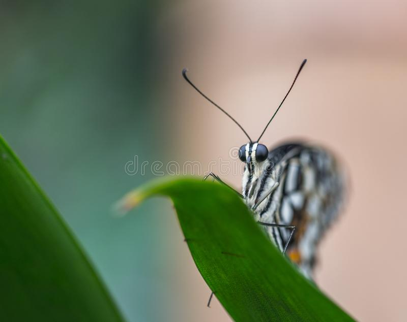 Selective Focus Photo of Gray and Black Butterfly stock photography