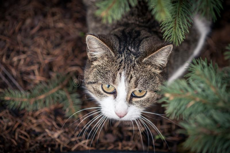 Selective Focus Photo of Gray and White Tabby Cat stock images