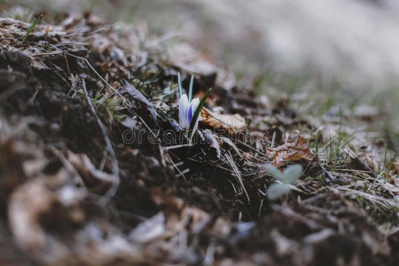 Selective Focus Photo of Green Grass royalty free stock photography