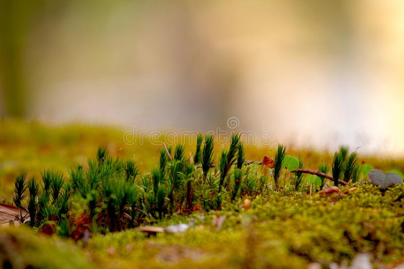 Selective Focus Photo of Green Grasses stock photography