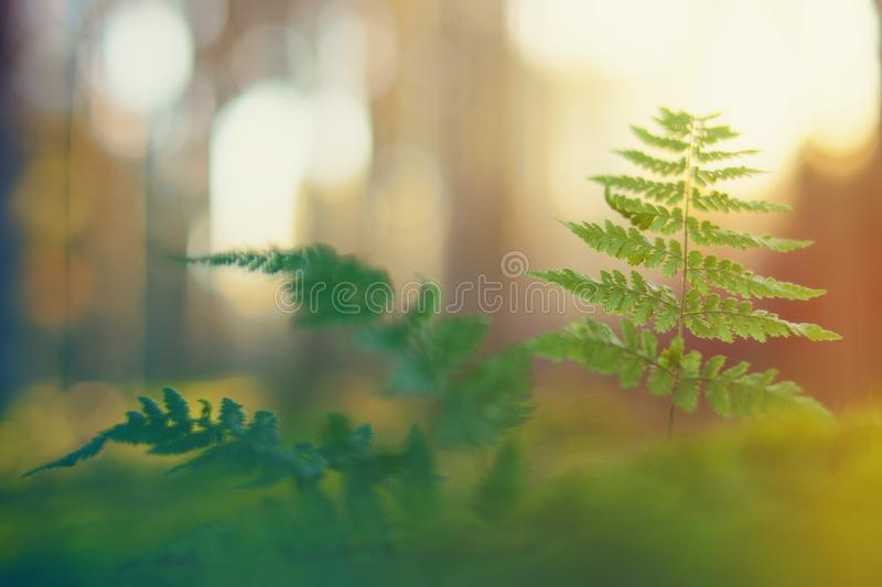 Selective Focus Photo of Green Leaf Plant stock images