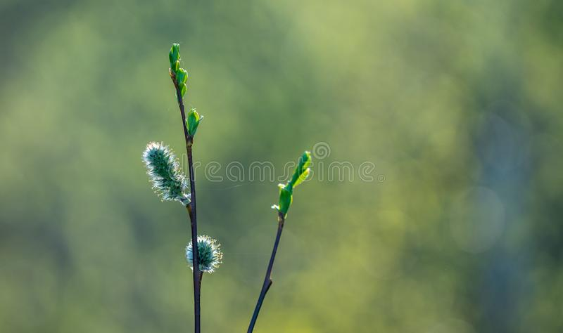 Selective Focus Photo of Green Plant royalty free stock photography