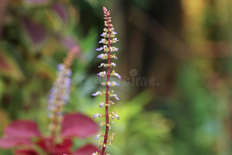 Selective Focus Photo of Purple Petaled Flower stock photo