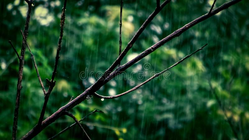 Selective Focus Photo Of Tree Branch royalty free stock image