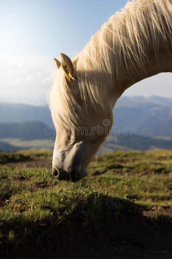 Selective Focus Photo of White Horse stock images
