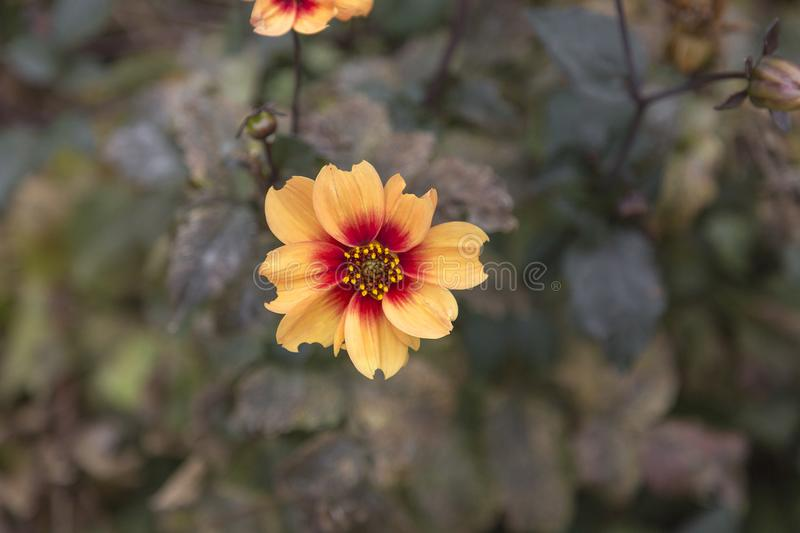 Selective Focus Photo of Yellow Petaled Flower stock image