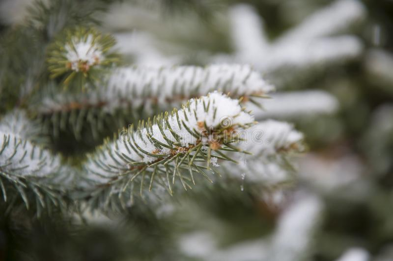Selective Focus Photographed of Green Leaf Plant With Snows royalty free stock image