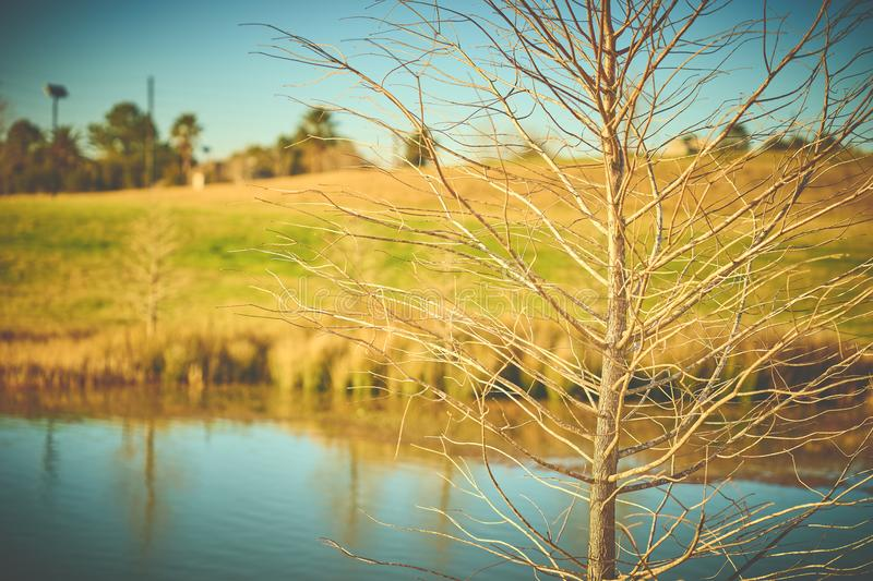 Selective Focus Photography of Bare Tree With Body of Water Background stock photos