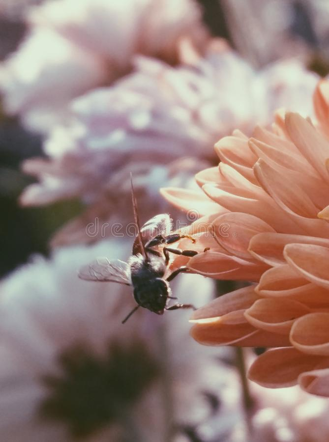 Selective Focus Photography of Bee on Flower stock images